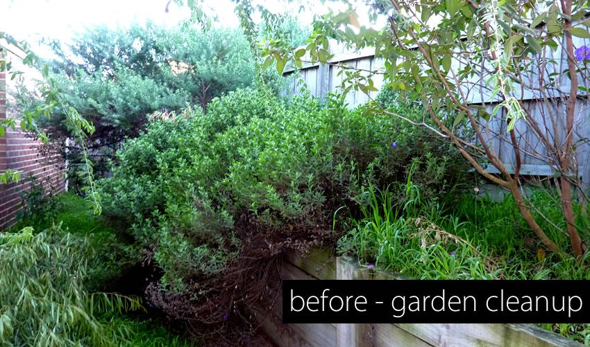 la-property-maintenance-garden-cleanup2