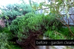 la-property-maintenance-garden-cleanup2